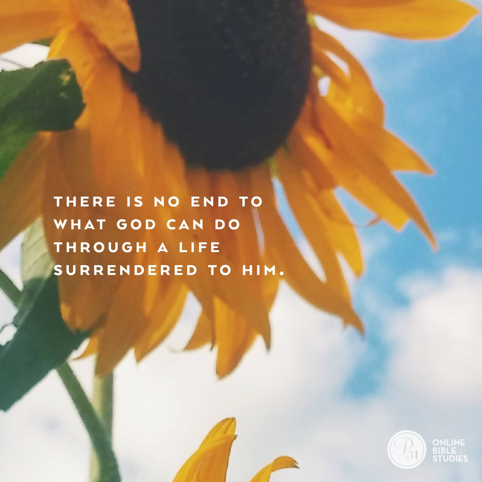 """Hidden Potential"" by Wendy Pope 